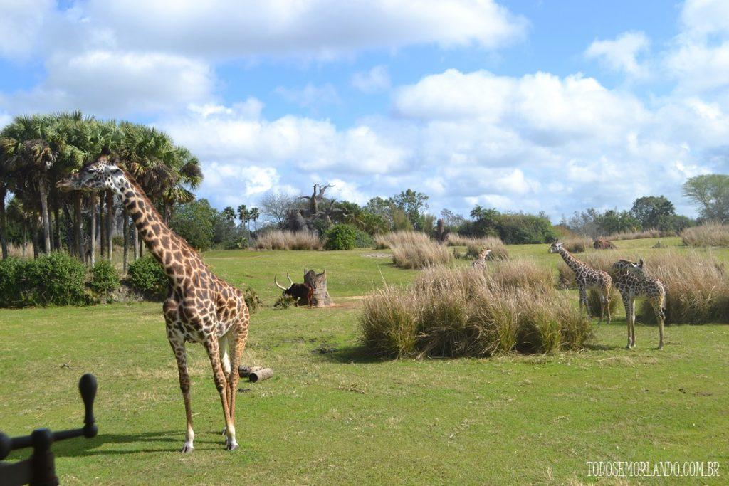 Safari no Animal Kingdom
